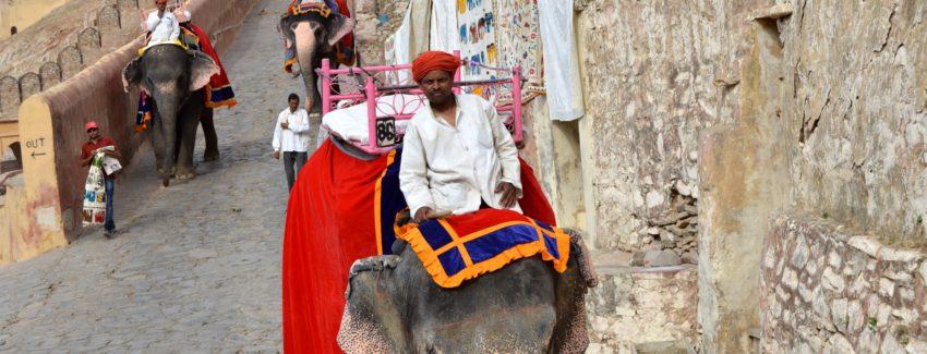 Jaipur_elefante_amber
