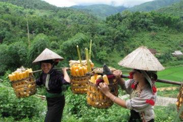 sapa ethnic markets