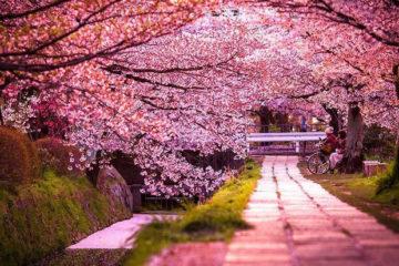 flores_japon